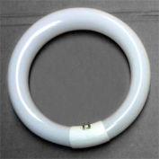 22 Watt Circle Fluorescent Bulb
