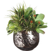 Hanover Artificial Echeveria/Grass Succulent Garden in Textured Ceramic Pot
