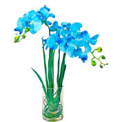 Creative Displays Blue Cymbidium Orchids In A Clear Cylinder Glass Vase