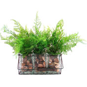Creative Displays Set Of Three Ferns In Glass Containers With Rocks In A Mesh Wire Basket