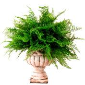 Creative Displays Maiden Hair Fern In Ceramic Pot