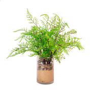 Creative Displays Cedar Fern In Glass Cylinder With Sand & Rocks