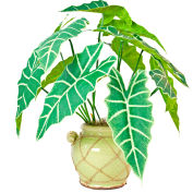 Creative Displays Giant Philodendron Bush In Light Green Ceramic Pot With Rope Embellishment