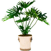 Creative Displays Monstera Tree In An Embellished Ceramic Container