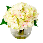 Creative Displays Hydrangea Clusters In Water Filled Glass Vase