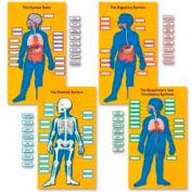 Carson-Dellosa® Human Body Bulletin Board Set, 84 Pieces/Set