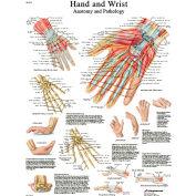 3B® Anatomical Chart - Hand & Wrist, Laminated