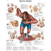 3B® Anatomical Chart - Sports Injuries, Laminated