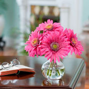 OfficeScapesDirect Gerbera Daisy Silk Flower Arrangement - Fuchsia