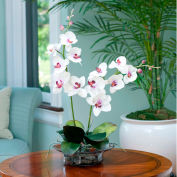 OfficeScapesDirect Phalaenopsis Orchid Silk Flower Arrangement - Cream/Fuchsia