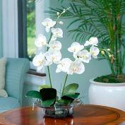 OfficeScapesDirect Phalaenopsis Orchid Silk Flower Arrangement - Cream/White