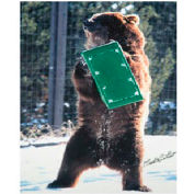 High Country Plastics Bear Box, Set of 2, Green