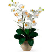 Nearly Natural Double Phalaenopsis Silk Orchid Flower Arrangement, Cream