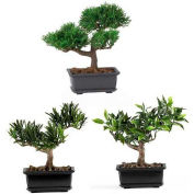 Nearly Natural 8.5'' Bonsai Silk Plant Collection (Set of 3)