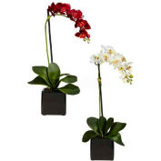 Nearly Natural Phaleanopsis Orchid with Black Vase Silk Arrangement (Set of 2)