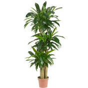 Nearly Natural Corn Stalk Dracaena Silk Plant