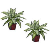 Nearly Natural Silver Queen Silk Plant (Set of 2)