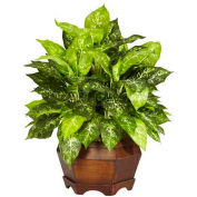 Nearly Natural Variegated Dieffenbachia with Large Hexagon Silk Plant