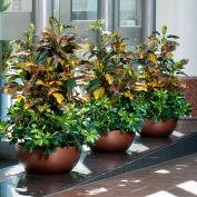 "OfficeScapesDirect 56"" Croton & Baby Schefflera Silk Plant"