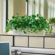 OfficeScapesDirect Pothos Cubicle Silk Plant