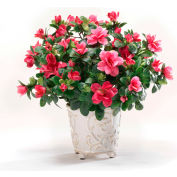 OfficeScapesDirect Azalea Silk Plant - Beauty