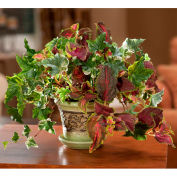 OfficeScapesDirect Mixed Coleus & Ivy Silk Plant