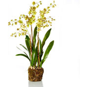 "Sage & Co.® 32"" Odontoglossum Orchid Drop-In, 15""W x 15""D x 32""H, Blush"
