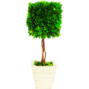 "Sage & Co.® Preserved Boxwood Square Topiary, 6""W x 6""D x 16""H"