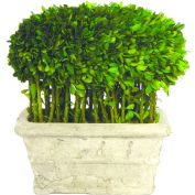 """Sage & Co.® Preserved Boxwood Loaf and Stems Topiary, 12""""W x 12""""D x 14""""H"""