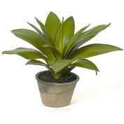 """Sage & Co.® Agave Succulent, 22""""W x 22""""D x 15""""H"""