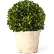 """Sage & Co.® Preserved Boxwood Round Topiary, 8-1/2""""W x 8-1/2""""D x 11-1/2""""H"""