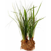 "Sage & Co.® 20"" Dune Grass Drop-In, 5-1/2""W x 4-1/2""D x 20""H"