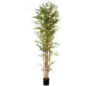 "Sage & Co.® 96"" Bamboo Plant - Pkg Qty 2"