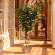 OfficeScapesDirect 6' Executive Ficus Silk Tree