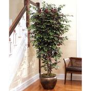 OfficeScapesDirect 6.5' Capensia Silk Tree