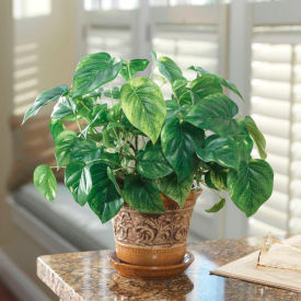 OfficeScapesDirect Pothos Accent Silk Plant