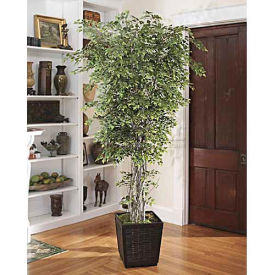 OfficeScapesDirect 8' Silver Birch Silk Tree