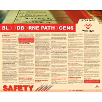 Poster, Bloodborne Pathogens, 24 x 30