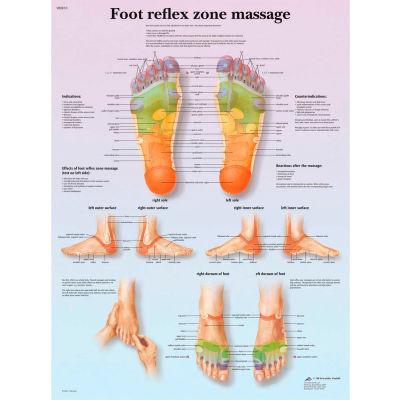 3B® Anatomical Chart - Foot Massage, Reflex Zone, Paper