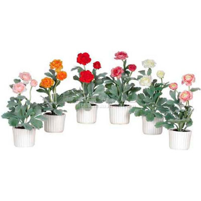 Nearly Natural Ranunculus with White Vase (Set of 6)