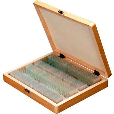 AmScope PS100D 100 pc. Anatomy Botany Prepared Microscope Slides with Wooden Case
